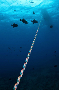 The way up; The ubiquitous Ascension Island Black Durgon ... by Paul Colley