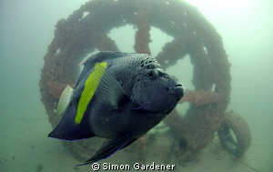 shot with nikon D7000 ,Nauticam housing ,10.5mm by Simon Gardener