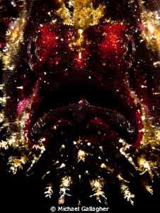 Underwater Santa!? Maybe not, but at least he's red with ... by Michael Gallagher