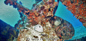 Hilma Hooker- Bonaire by Lisa Hinderlider