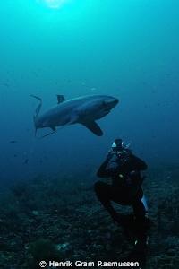 Diver photographing a Thresher Shark by Henrik Gram Rasmussen
