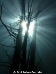 underwater tree by Paul Andres Gonzalez
