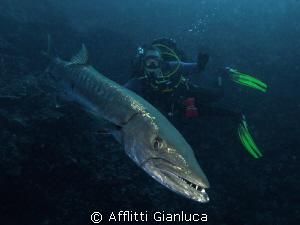 barracuda by Afflitti Gianluca