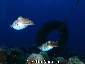 squids by Afflitti Gianluca