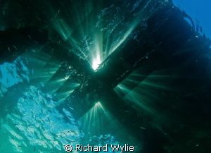 Under the jetty! This is one of the reasons I love the te... by Richard Wylie