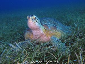 Turtle Grass by Abimael Márquez