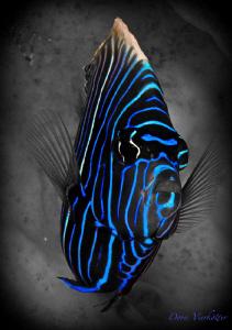 blue stripes by Doris Vierkoetter
