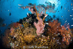 Gili meno, Indonesia, d200, tokina 10-17 by Chris Hamilton