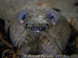 Face to face with a Snake Eel by Abimael Márquez