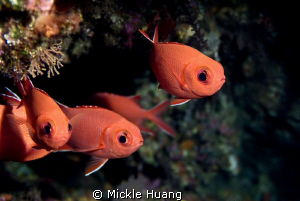 BIG EYES