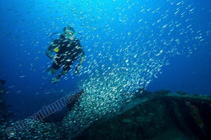 """Diver caught in a sliverside """"rain"""" at Kudimaa Wreck by Barbara Schilling"""