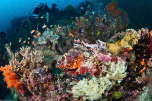 find the scorpionfish (Bangka_Sulawesi) by Mathieu Foulquié