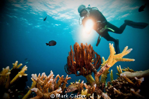 Diver highlighting the coral reef. by Mark Carter