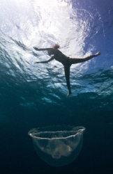 Jump into the jelly. by Jason Decaires Taylor