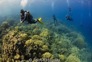 Diving an endless reef by Erich Reboucas