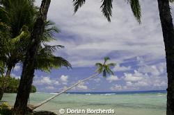 A palm over the beach at Mussau Island, P.N.G. by Dorian Borcherds