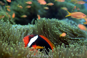 NEIGHBORHOOD