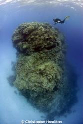 barracuda bommie, Agincourt reef GBR by Christopher Hamilton