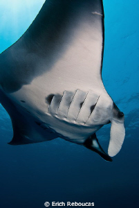 Last entry of the Year.  Wishing many mantas, sharks, ti... by Erich Reboucas