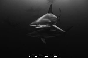 PAIR OF BRONZE WHALERS PHOTOGRAPHED OF MYBOYTI, KWAZULU N... by Ivo Kocherscheidt