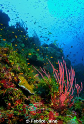 As a marine biologist, I was recently invited to take par... by Fabrice Jaine