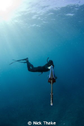 Freediver lines up his next shot... by Nick Thake