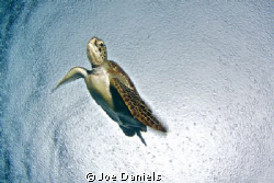 Turtle in the rain by Joe Daniels