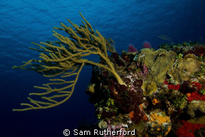 Coral landscape by Sam Rutherford