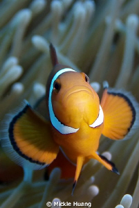 HAPPY NEW YEAR !