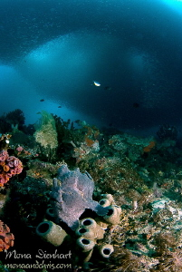 I am encircled!!! Giant frogfish under a sardine cloud a... by Mona Dienhart