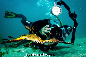 Good friend from Bay Play photographing male weedy seadra... by Richard Wylie