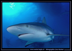 Reef Shark not far from Tiger Beach... :O)... by Michel Lonfat