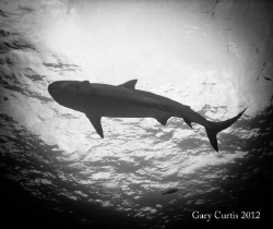 Dark Shadow of the Shark.