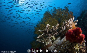 This image is taken during the 6-th Underwater Photograph... by Martin Hristov