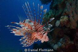 looking at the corals by Daniel Flormann