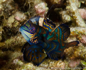 taken in lembeh by Rene Braband Andersen