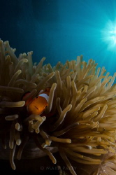 Nemo! by Mark Pacey
