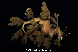 Leafy by Christine Hamilton
