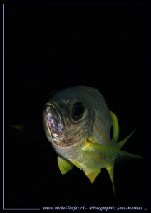Face to face with a Jack Fish... :O)... by Michel Lonfat