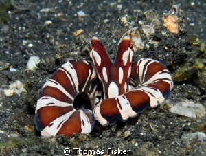 Wunderpus retreat. by Thomas Fisker