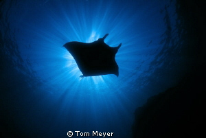 Taken at the Boiler in the Socorro Islands with Tokina 10-17 by Tom Meyer