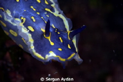 Aegean Nudi by Sergun Aydan