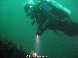 Diver on the Karlsruhe, Scapa Flow by Ros Parmenter