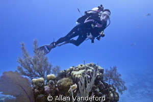 Diver at Randy's Gazebo,Little Cayman. by Allan Vandeford