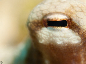 "Octopus eye in ""Bokeh"" style :-) 60mm makro lens, ISO 200... by Rico Besserdich"