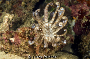 Solar Powered Nudi near Gangga by Larry Polster