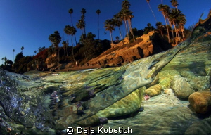 warm afternoon this winter in the shallows by Dale Kobetich