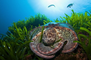 flattened octopus :) by Roland Bach