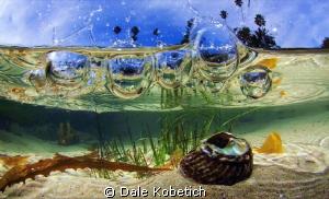 water splash in a tide pool Laguna Beach by Dale Kobetich