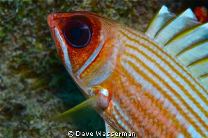 A colorfull close up with outstanding definition of the e... by Dave Wasserman